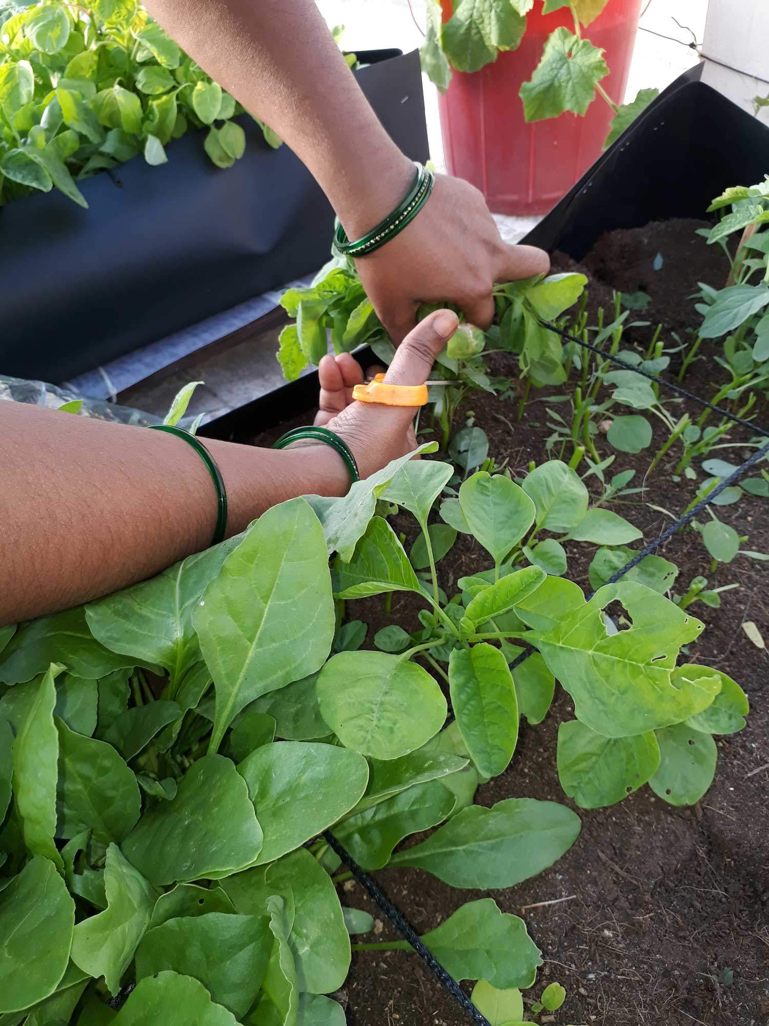 Planning A Productive And Practical Kitchen Garden