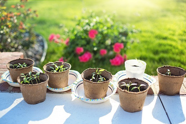 Start Seeds Indoors In A Few Simple Steps
