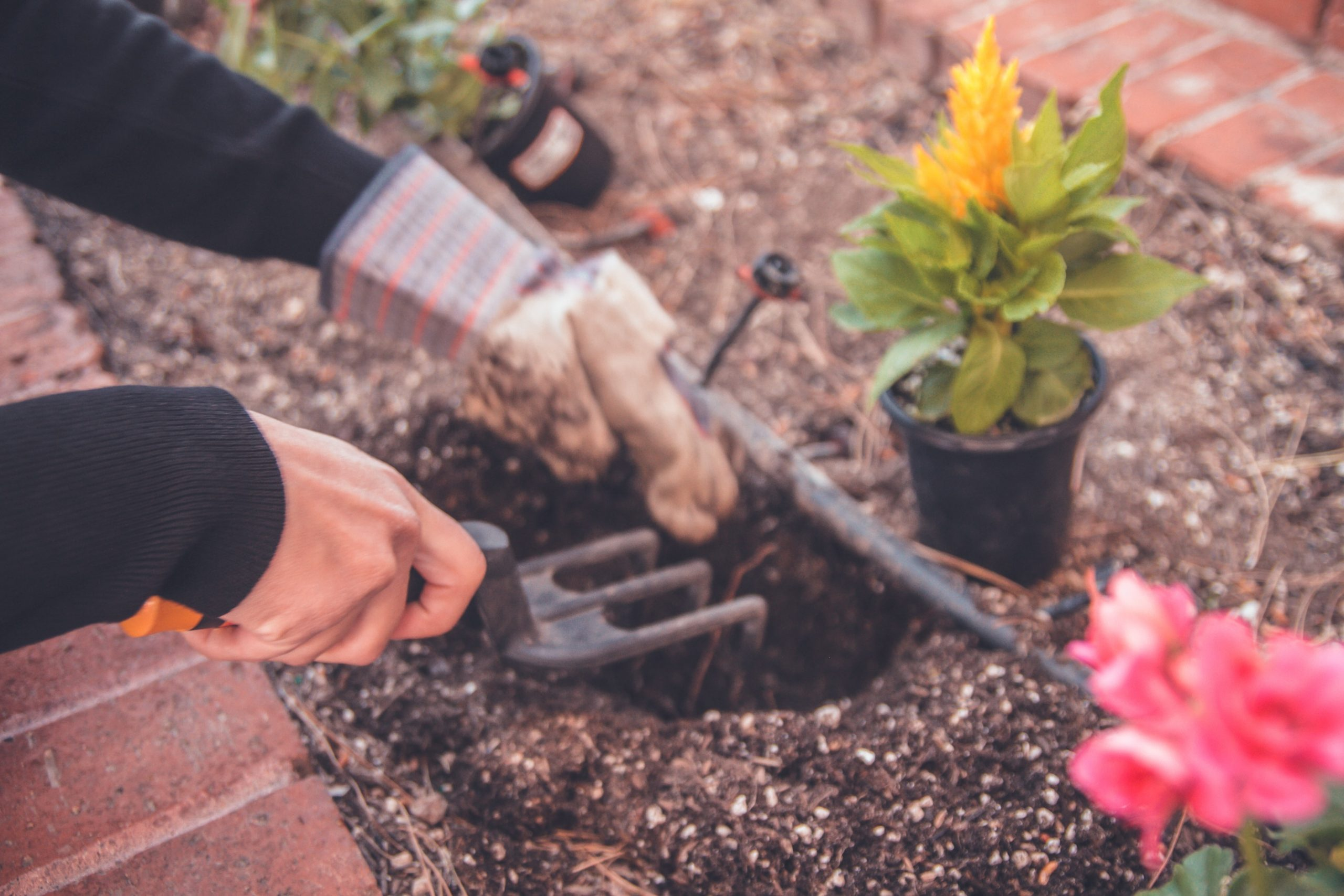 10 gardening tips you need to know for the Monsoon