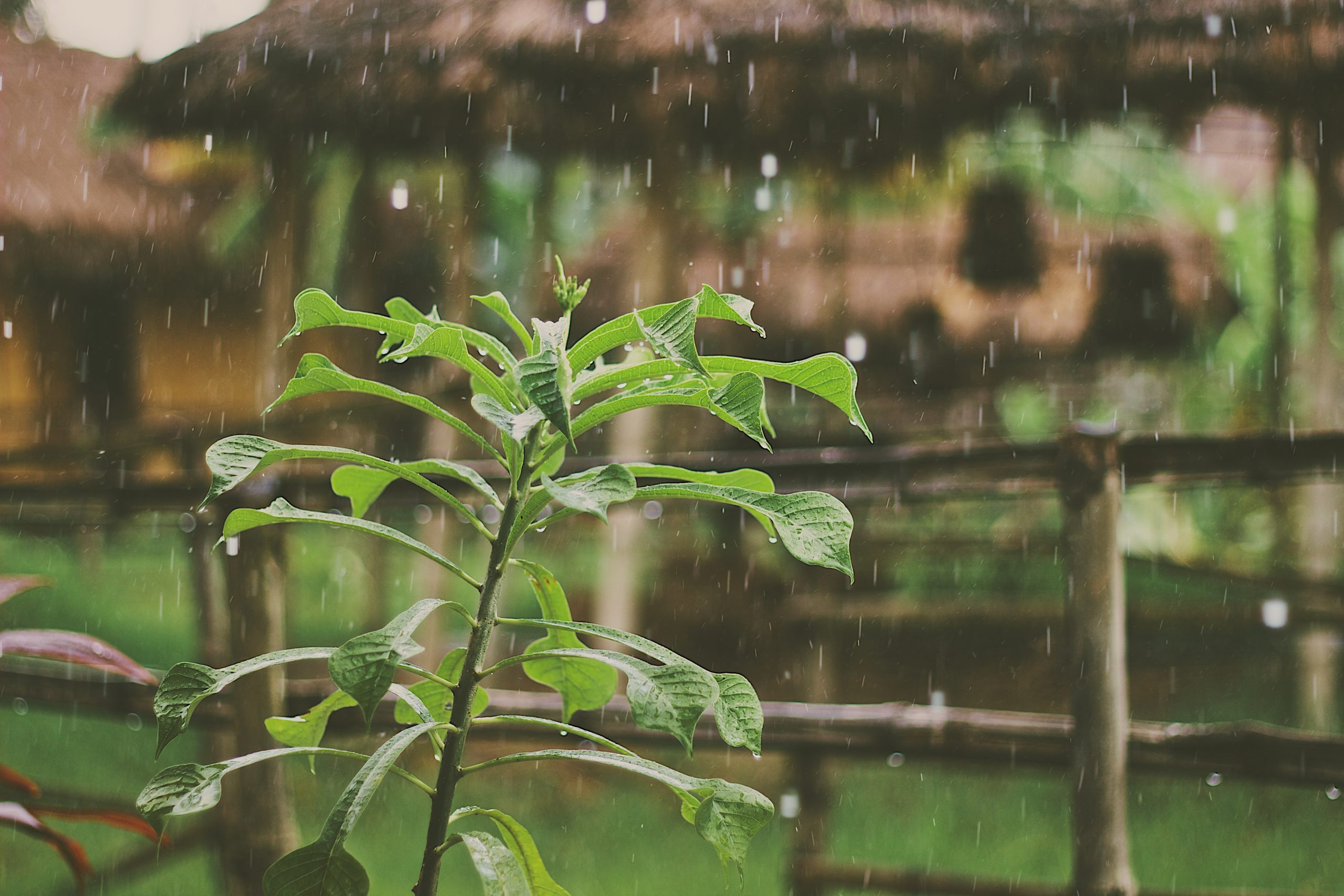 10 Veggies that thrive in your garden during Monsoon